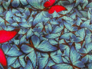 kangas_sininen perhonen